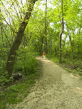 Hiker on Path, Theodore Roosevelt Island, Washington DC, USA, District of Columbia Photographic Print by Lee Foster