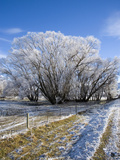Hoar Frost, Oturehua, South Island, New Zealand Photographic Print by David Wall