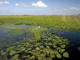 Water Lilies and Sawgrass in the Florida Everglades, Florida, USA Photographic Print by David R. Frazier