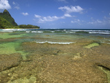 Coral on Tunnels Beach, Kauai, Hawaii, USA Photographic Print by Dennis Flaherty