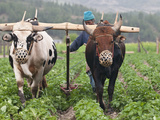 Farmer Plowing, Bumthang, Bhutan Photographic Print by Dennis Kirkland