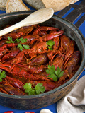 European Freshwater Crayfish in Tomato Sauce (Austropotamobius Pallipes) Photographic Print by Nico Tondini
