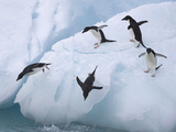 Adelie Penguins, Paulet Island, Antartica, Antarctic Photographic Print by Hugh Rose