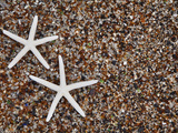 Starfish Skeletons, Kauai, Hawaii, USA Photographic Print by Dennis Flaherty