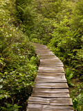 Cape Flattery Boardwalk, Neah Bay, Washington, USA Photographic Print by Peter Hawkins