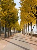 Tree-Lined Pathway Along Elbe River Dresden, Germany Fotoprint van Michael DeFreitas