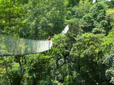 Woman on a Canopy Walkway Above the Amazon Jungle of Brazil or Peru, South America Photographic Print by Miva Stock