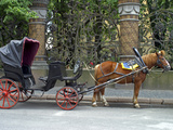 Horse-Drawn Carriage, St. Petersburg, Russia Photographic Print by Kymri Wilt