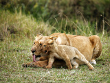 Lioness and Cub, Masai Mara Game Reserve, Kenya Photographic Print by Kymri Wilt