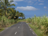 Sugarcane Plantation, Reunion Island, French Overseas Territory Photographic Print by Cindy Miller Hopkins