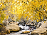 Fall Foliage at Creek, Eastern Sierra Foothills, California, USA Photographic Print by Tom Norring