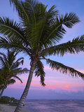 Sunset and Palm Tree, Coral Coast, Viti Levu, Fiji, South Pacific Photographic Print by David Wall