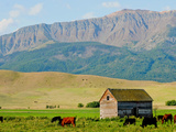 Wallowa Mountains and Barn in Field Near Joseph, Wallowa County, Oregon, USA Photographic Print by Nik Wheeler