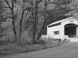 Wild Cat Covered Bridge, Lane County, Oregon, USA Photographic Print by William Sutton