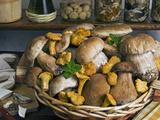 Penny Bun, Cap (Boletus Edulis), Chanterelles (Cantharellus Cibarius), Mushrooms, Italy Photographic Print by Nico Tondini