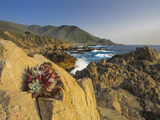 Lonely Rock Plant, Garrapata State Beach, Big Sur, California Pacific Coast, USA Photographic Print by Tom Norring