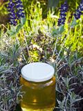 Lavender Honey in Jar and Lavender Plant Photographic Print by Nico Tondini