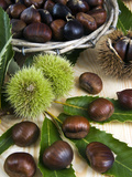 Sweet Chestnuts Photographic Print by Nico Tondini