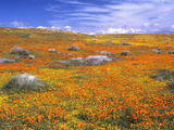 California Poppy Reserve, Lancaster, California, USA Photographic Print by John Alves