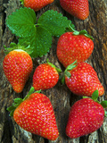Strawberries (Fragaria Vesca) on a Tree Bark, Garden Strawberry Photographic Print by Nico Tondini