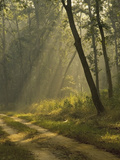 Morning Light, Kanha National Park, India Photographic Print by Jan & Stoney Edwards