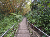 Path Through Bamboo Forest, Akaka Falls State Park, Hawaii, USA Photographic Print by Rob Tilley