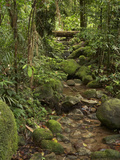 Stream, Wooroonooran National Park, Bartle Frere, North Queensland, Australia Photographic Print by David Wall