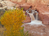 Waterfall, Capitol Reef National Park, Utah, USA Photographic Print by Cathy & Gordon Illg