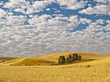 Dawn Breaks on Wheat Field, Walla Walla, Washington, USA Photographic Print by Richard Duval