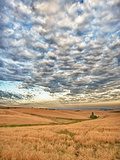 Dawn Breaks on Wheat Field, Walla Walla, Washington, USA Photographic Print by Richard Duval