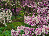 Quarry Garden, Wilmington, Delaware, USA, Deleware Photographic Print by Jay O'brien
