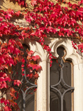 Ivy on Wall Germany Photographic Print by Michael DeFreitas