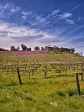 Lumiere Winery, Temecula, California, USA Photographic Print by Richard Duval