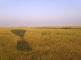 Shadow of Hot Air Balloon on the Grassland, Maasai Mara National Reserve, Kenya Photographic Print by Keren Su