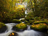 A Rushing Mccord Creek with Yellow Fall Color from Bigleaf Maple, Columbia Gorge, Oregon, USA Photographic Print by Gary Luhm