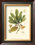 Sassafras Prints by  Sprague