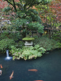 Japanese Garden, Tokyo, Japan Photographic Print by Rob Tilley