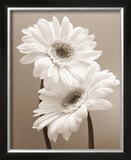 Two Daisies Print by Carol Sharp