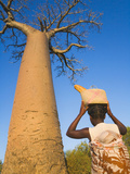 Woman with Baobab Tree, Morondava, Toliara, Madagascar Photographic Print by Keren Su