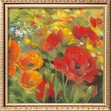 Oriental Poppy Field I Art by Carol Rowan
