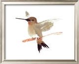 Hummingbird Prints by Aurore De La Morinerie