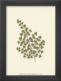 Woodland Ferns II Print by Edward Lowe