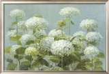 White Hydrangea Garden Poster by Danhui Nai