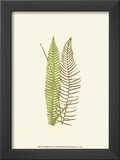 Woodland Ferns V Prints by Edward Lowe