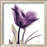 Royal Purple Parrot Tulip Art by Albert Koetsier