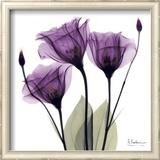 Royal Purple Gentian Trio Posters by Albert Koetsier