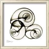 X-ray Snail Shells, Sepia Posters by Albert Koetsier
