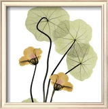 Nasturtium Bouquet Poster by Albert Koetsier
