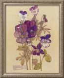 Wild Pansy Art by Charles Rennie Mackintosh