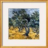 Oliveraie Prints by Vincent van Gogh